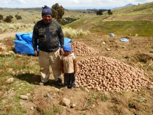 Don Tomas Rojas Harvesting Potatoes in Sancayani