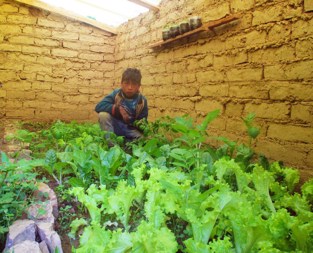 Picture of Justiniano Alanes Ventura's family greenhouse in Huayco Arriba growing vegetables - (his son in the picture)